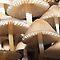 Toadstools and Mushrooms (fungi)
