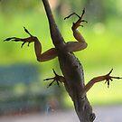 More Lizard by John  Simmons
