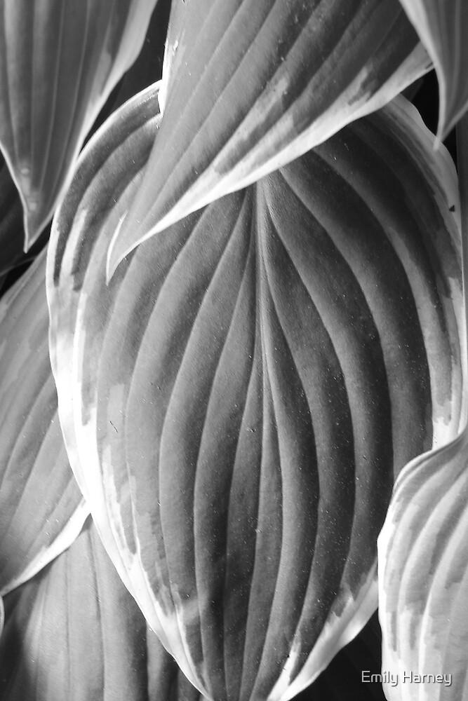 Elephant Ear Leaf by Emily Harney