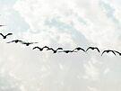 Flying in Formation by FrankieCat