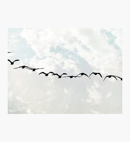 Flying in Formation Photographic Print