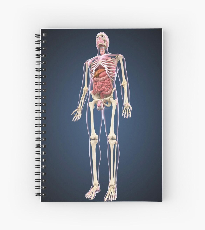 Cuadernos de espiral «Vista de longitud completa del cuerpo humano ...
