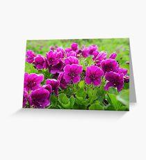Beauty purple flowers Rhododendron camtschaticum Greeting Card