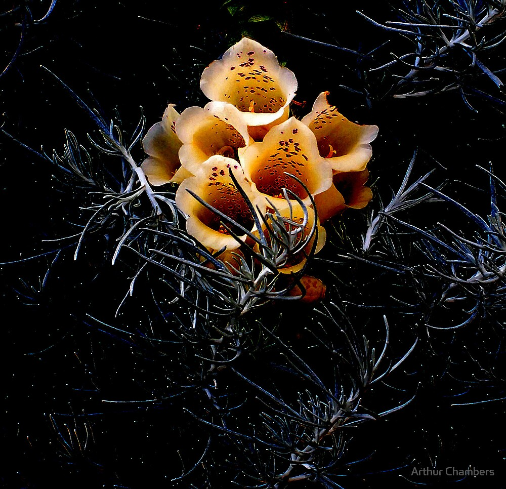 The singing bush.......... by Arthur Chambers