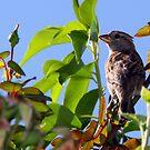 Proud Sparrow by Bob Martin