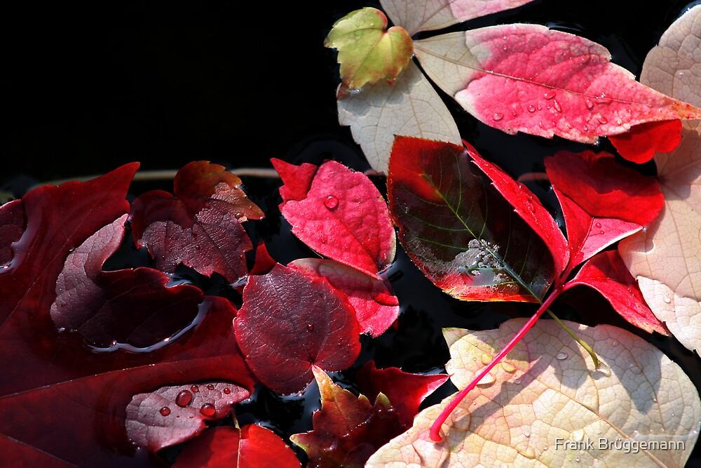 autumn leaves 3 by Frank Brüggemann