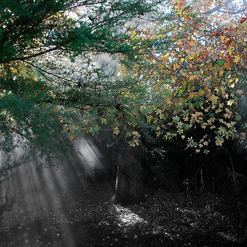 Shadow by timlim