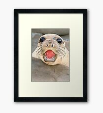 A female Elephant seal Mirounga angustirostris Framed Print
