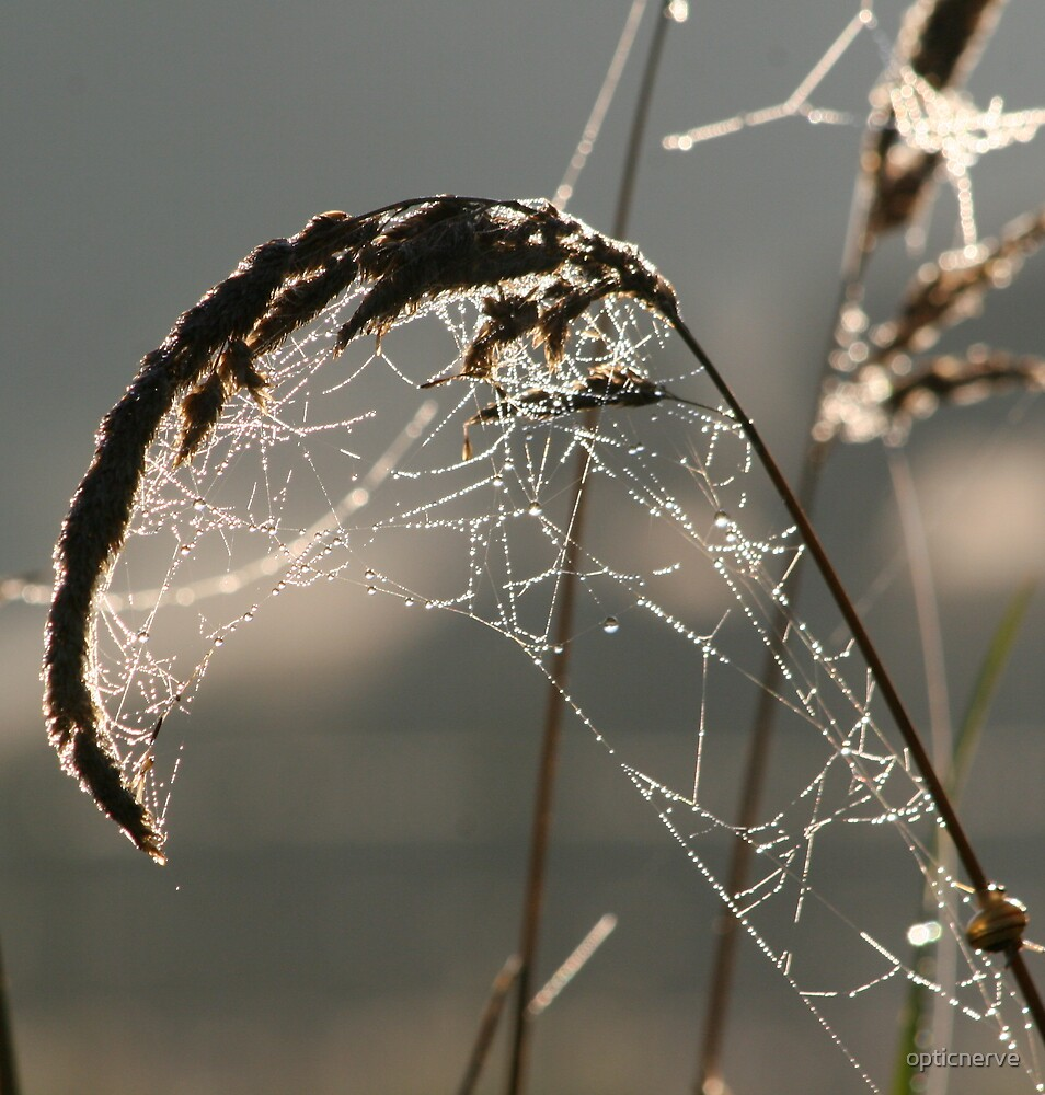 webdew by opticnerve