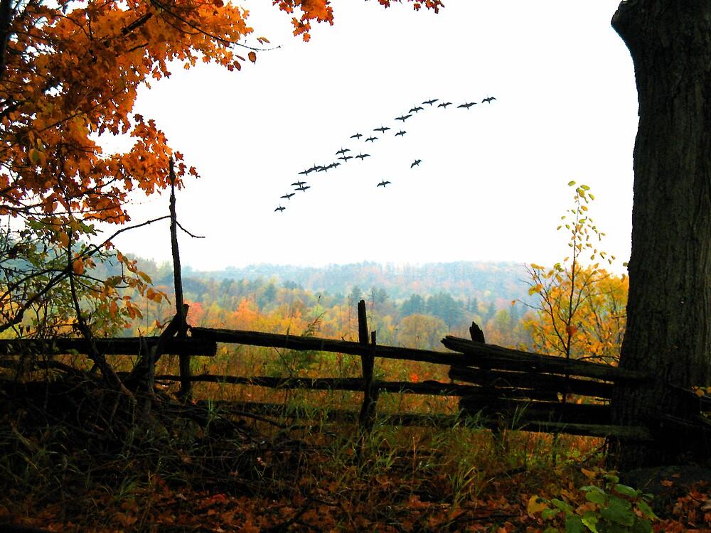 Nature's Window by nikspix