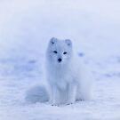 White Snow Fox Softness by awiec