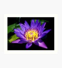 Lotus Glow Art Print