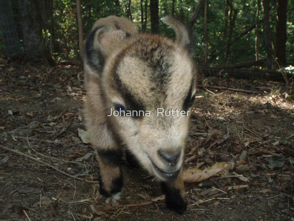 My Friend's Goat by Johanna  Rutter