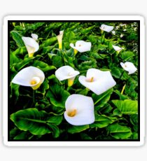 CALLA LILLIES; Garden Flower Print Sticker
