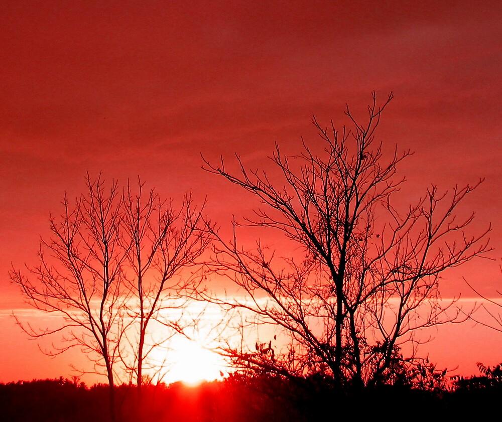 Pink Sunset by nikspix