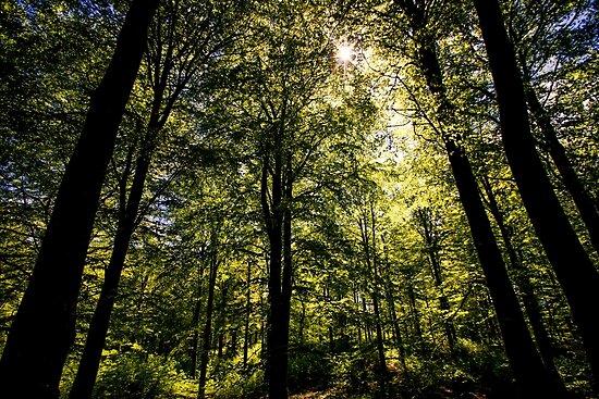 The Dark Woods by posnerstudios