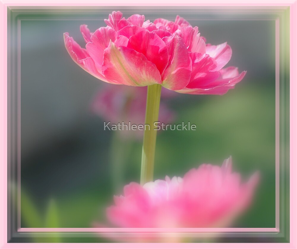 Pretty In Pink by Kathleen Struckle