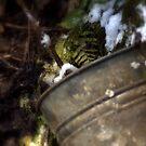 tin bucket in a snowy Oregon forest by Dawna Morton