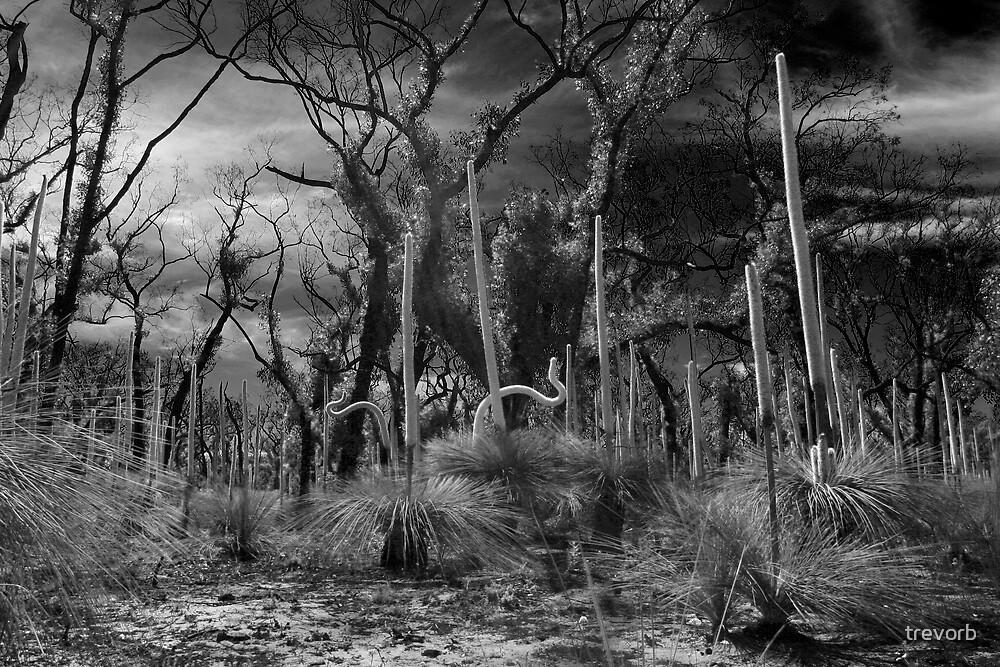 Brisbane Ranges. by trevorb