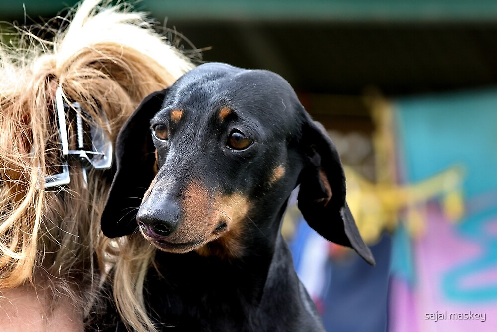 dog in back by sajal maskey