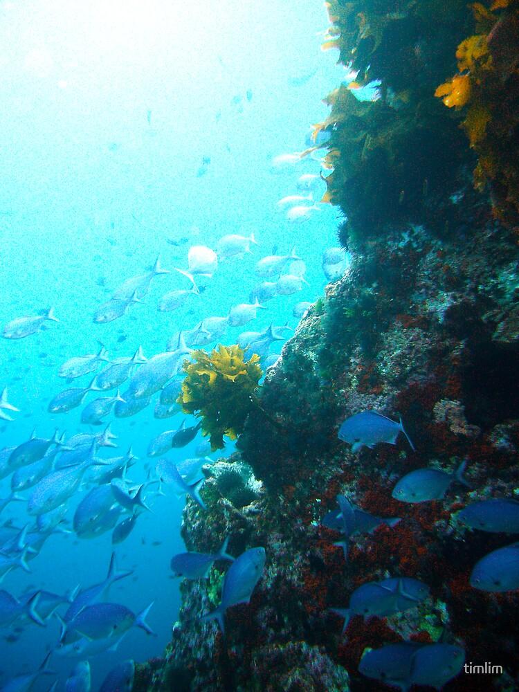 Underwater by timlim