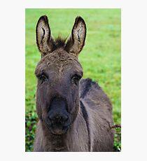 Donkey Poster Photographic Print