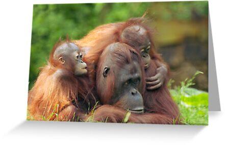 mother orangutan with her cute babies  by Enjoylife