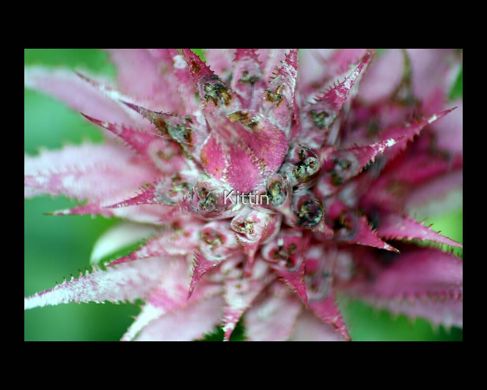flower 03 by Kittin