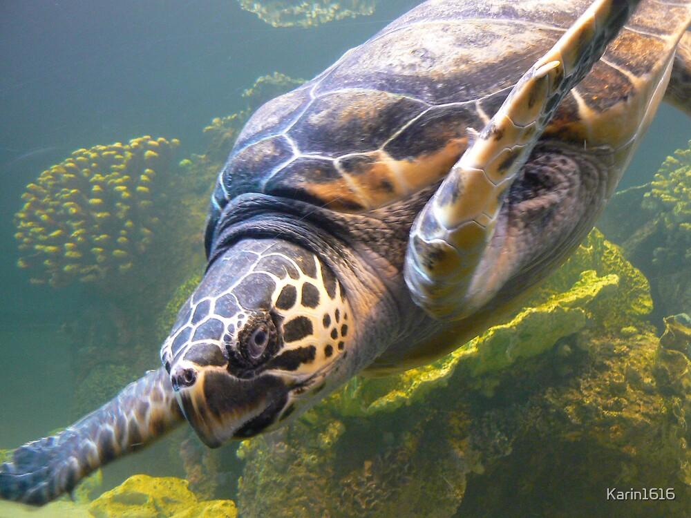 Sea Turtle by Karin1616