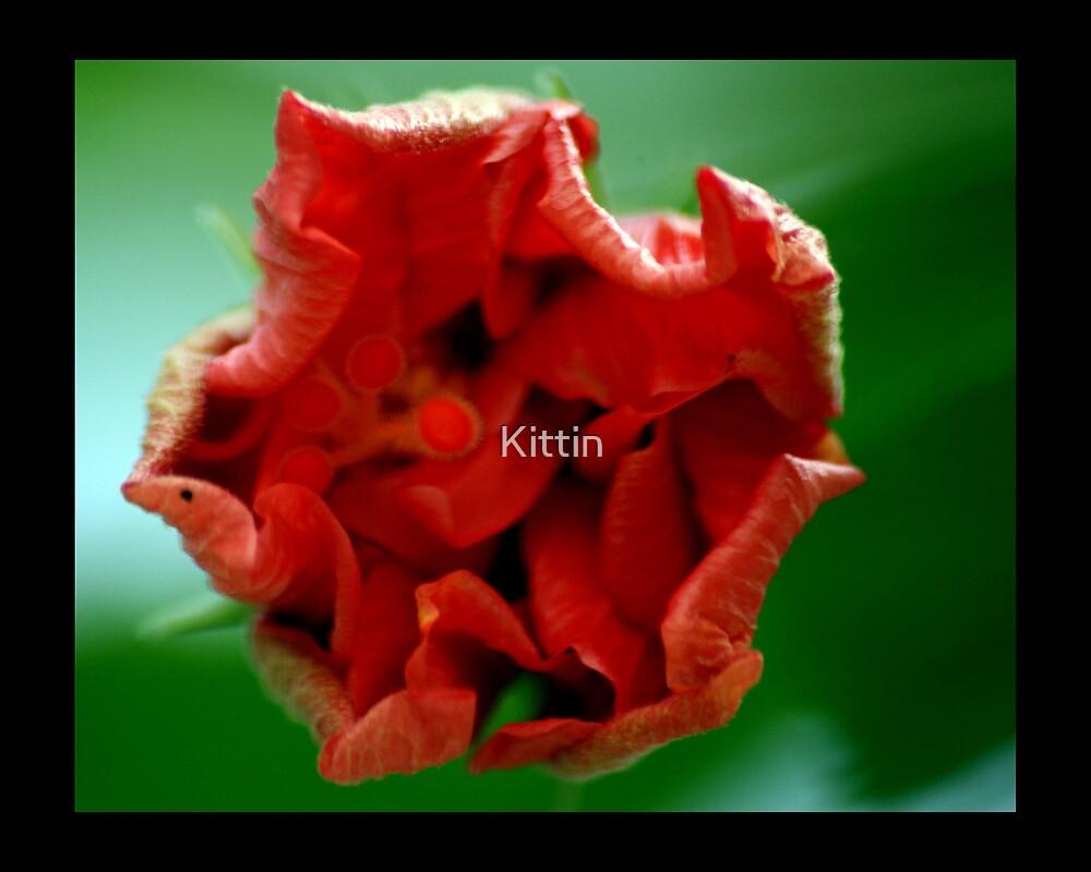 flower 05 by Kittin