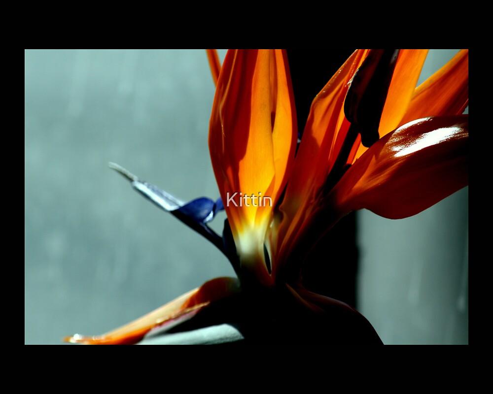 bird of paradise 07 by Kittin