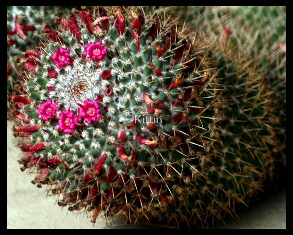 cactus 02 by Kittin