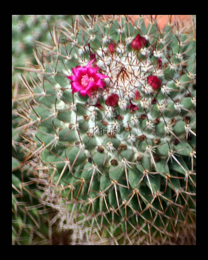 cactus 03 by Kittin