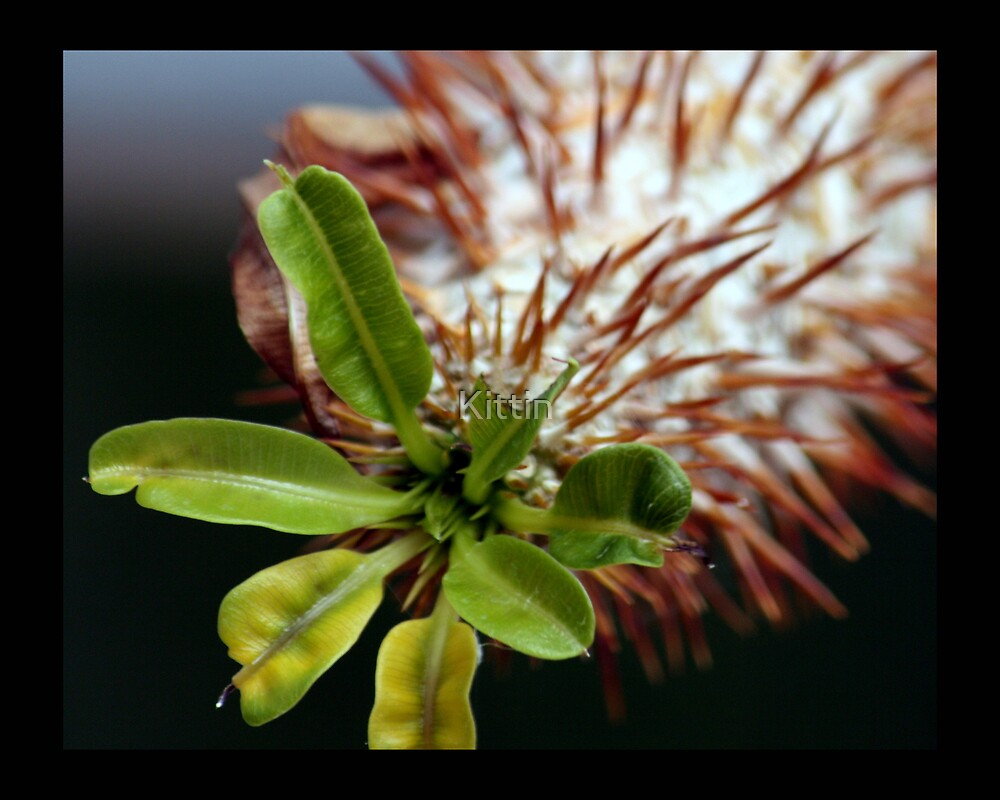 cactus 06 by Kittin