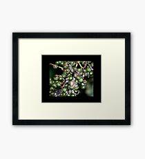 berries 01 Framed Print