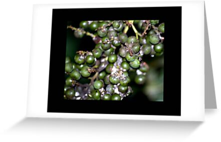berries 01 by Kittin