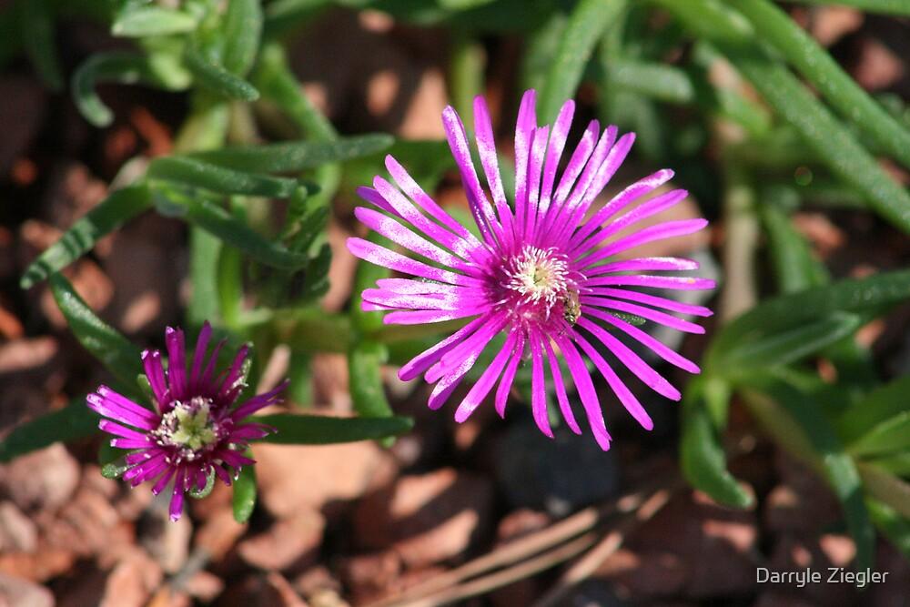 Unknow Little Flower by Darryle Ziegler
