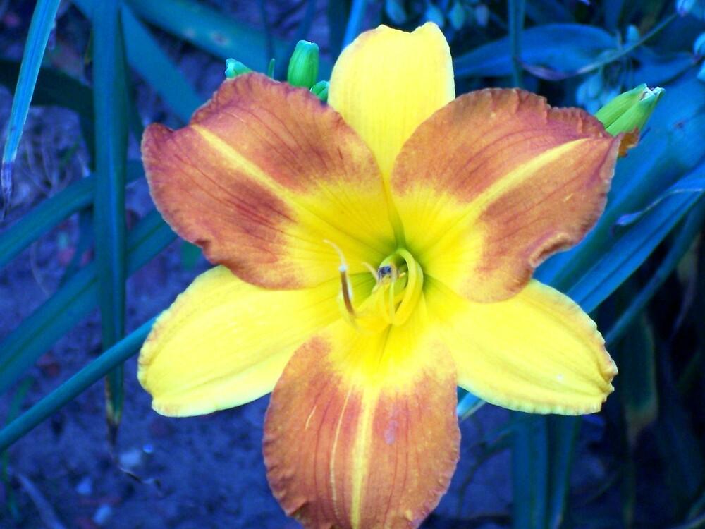 daylily  by Rebekah