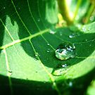 Water Drop by Chris Richards