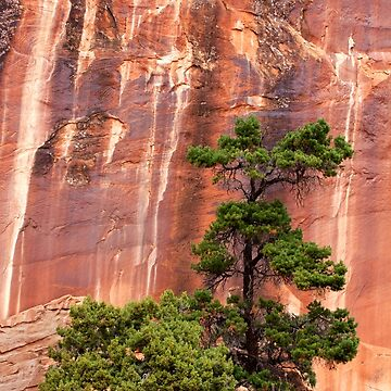 Moab Trees by ThugPigeon