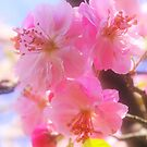 Soft Pink by PhotoBAB