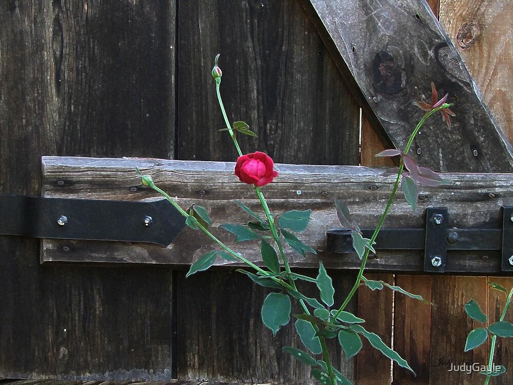 Single Rose by Judy Gayle Waller