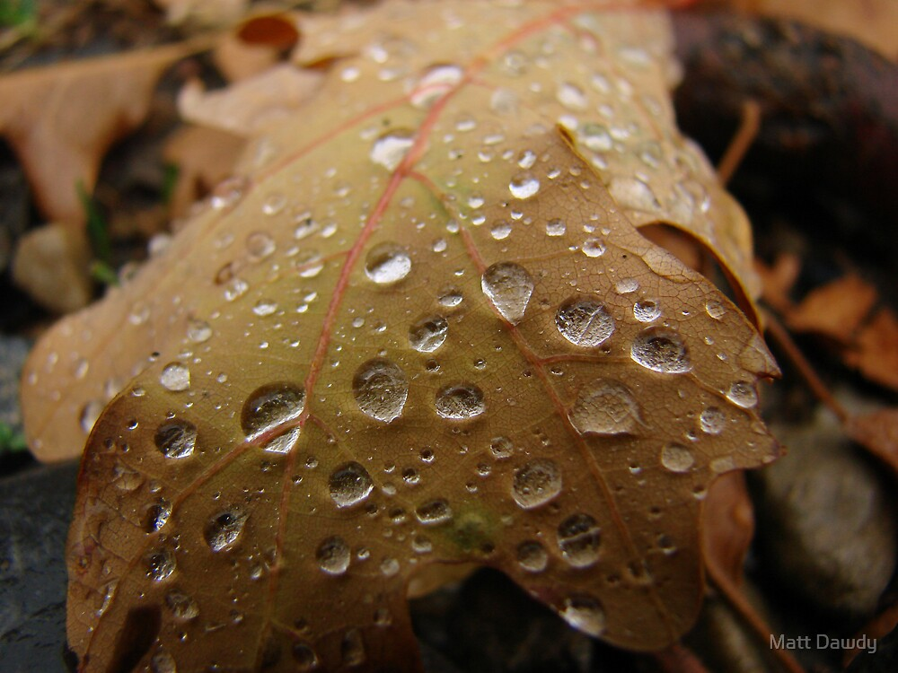Leaf Drops by Matt Dawdy