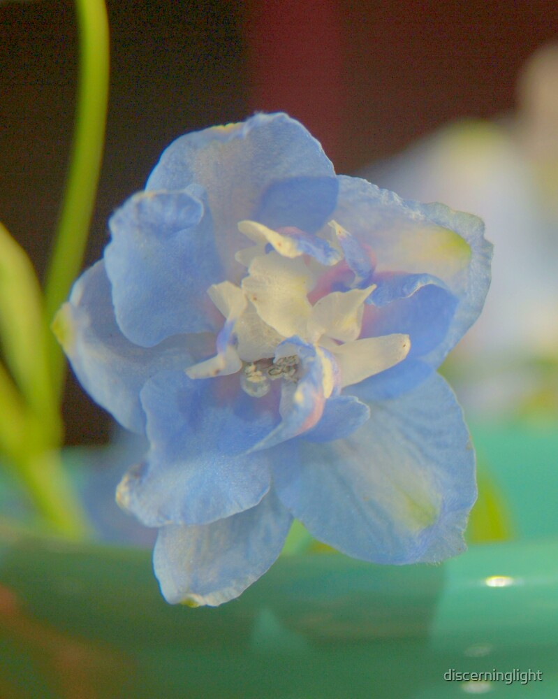 Floret by discerninglight