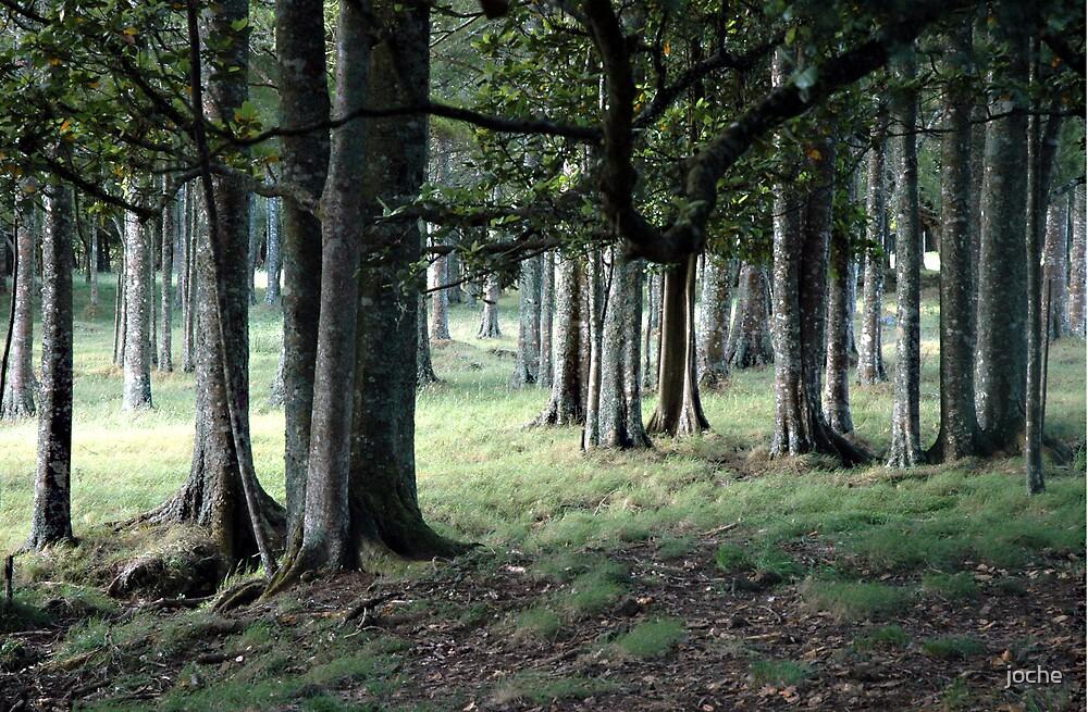 Silent Trees by joche