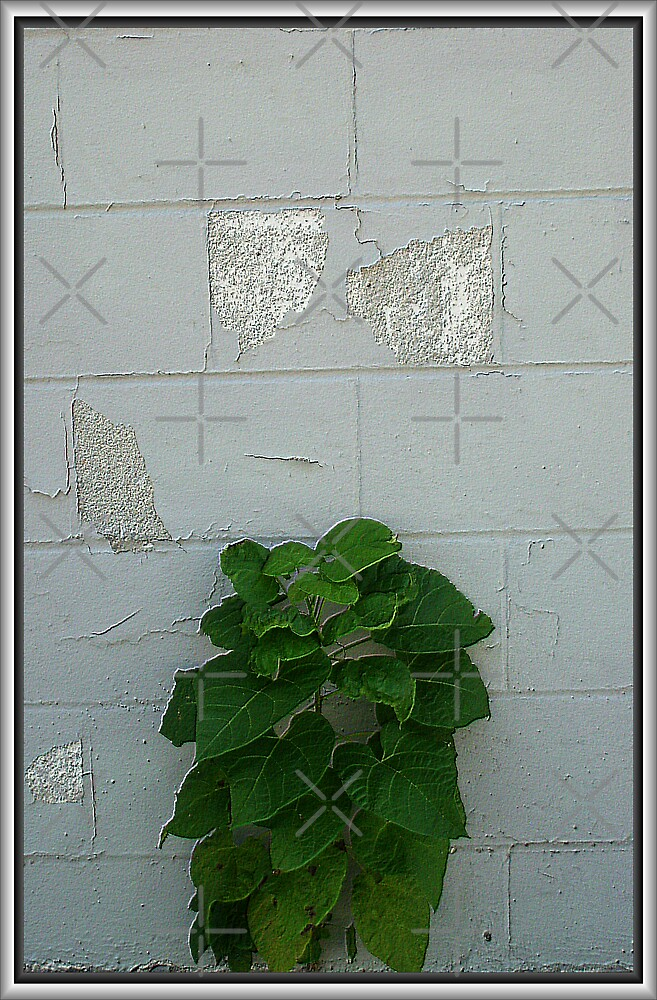 Do I make this wall look good or what?? by Tammy Soulliere Ratliff