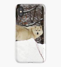 Arctic Wolf Pondering iPhone Case