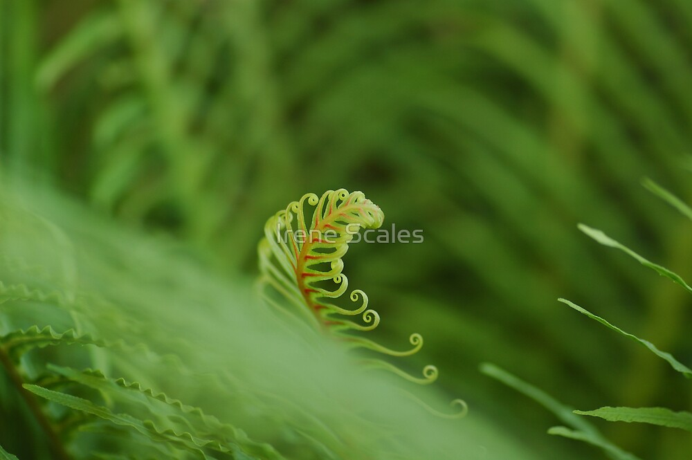 New Life II by Irene Scales