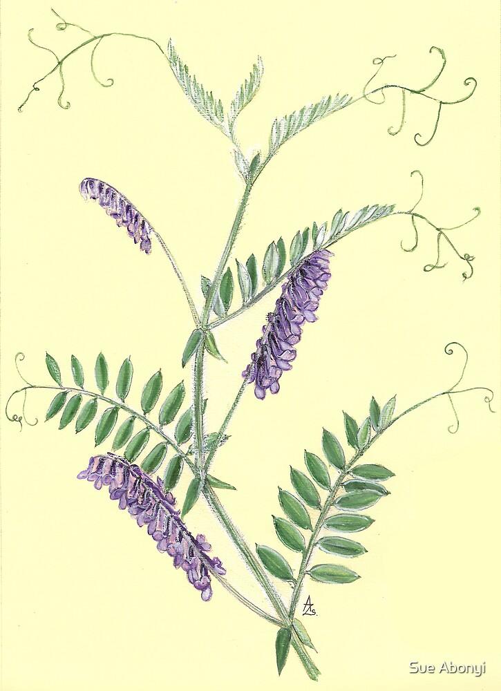 Hairy Vetch - Vicia villosa by Sue Abonyi
