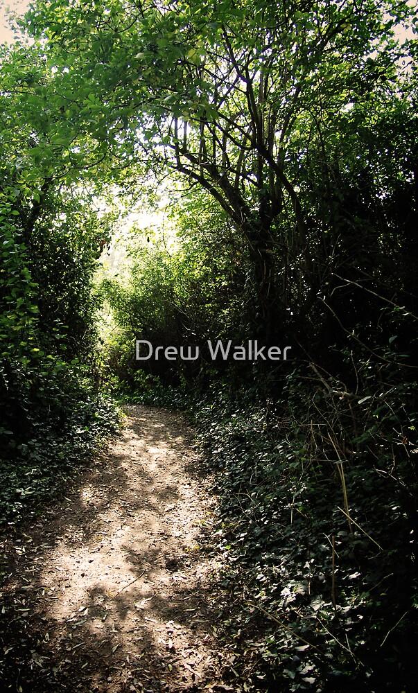 Woodland wanderings by Drew Walker